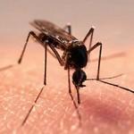 Если ребенка покусали комары