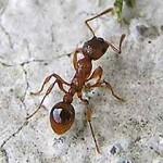 Первая помощь при укусах муравьев