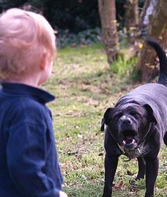 Научите детей, как правильно вести себя при нападении собаки
